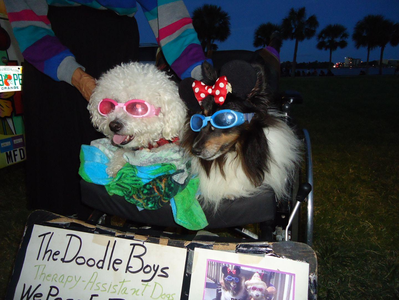 Daytona Beach Hot Dogs