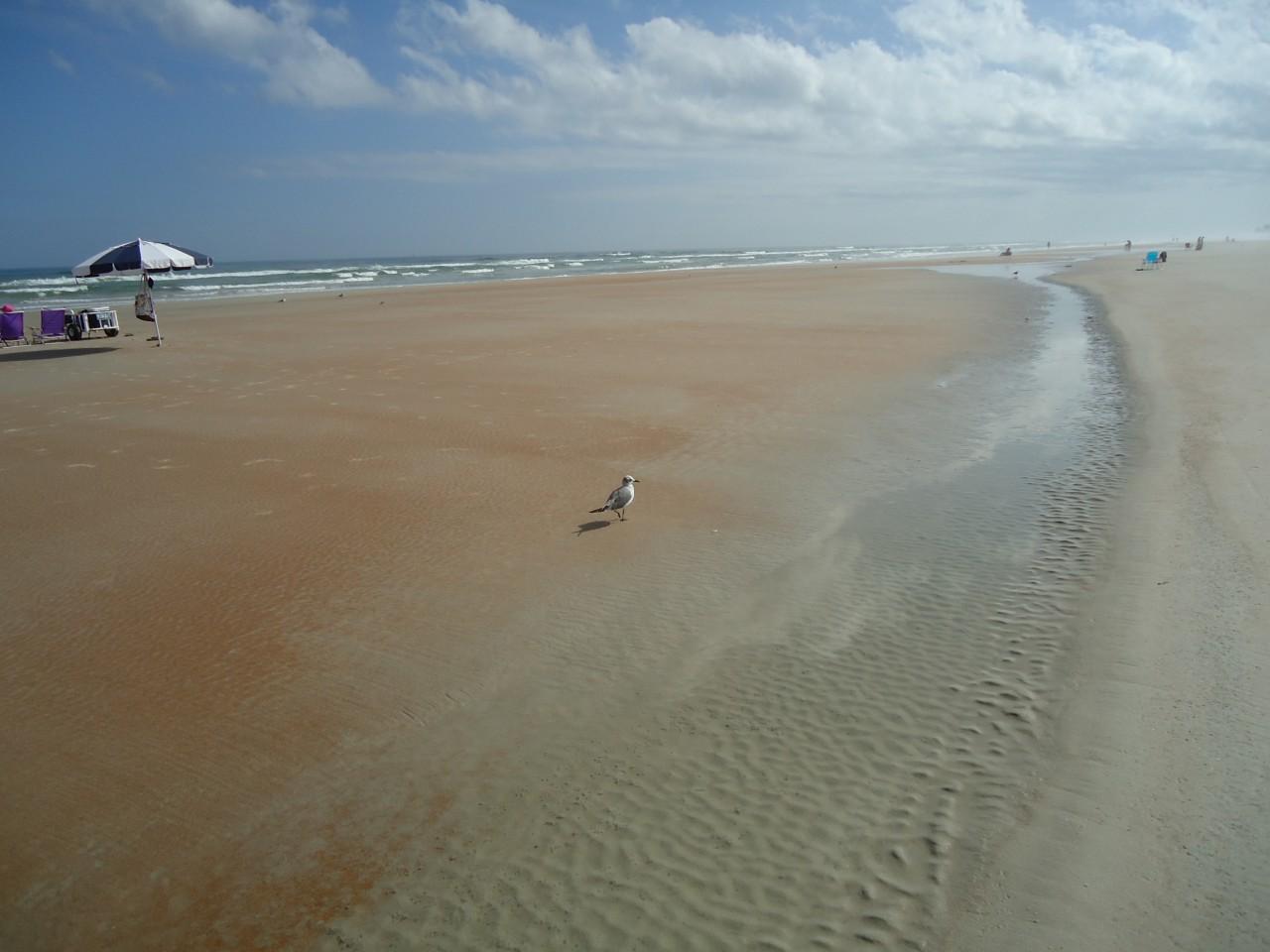 Daytona Beach is for the snow birds